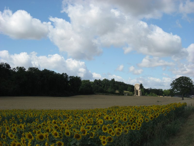 A sunflowers field in the country